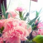 carnation0