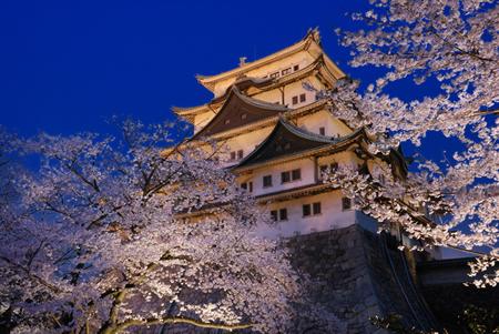 名古屋城夜桜ライトアップ