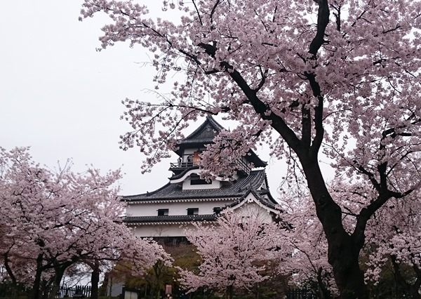 inuyamajo1
